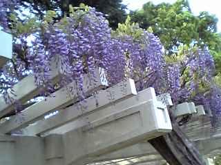 Jouhkokukouen_fuji200704