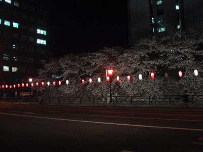 Sunpujou_sotobori_sakura